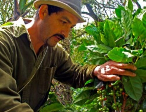 The Coffee Grower – Short Film by Monterverde Now